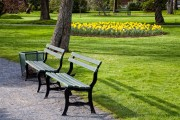 Canada-NS-Halifax-park-benches-yellow-daffodils.jpg